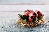 picture of bird egg  - Bird colorful egg in nest wooden background - JPG