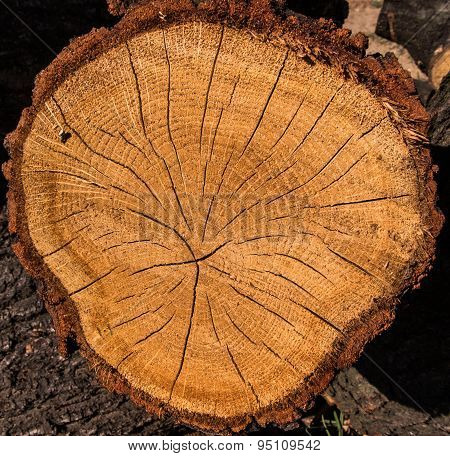 Oak Cut Into Pieces As Fuel