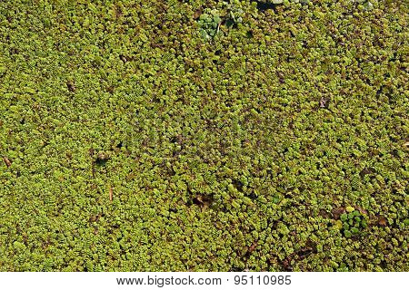 Water plants as a texture