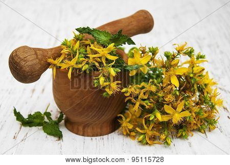 Saint-john's-wort Flowers