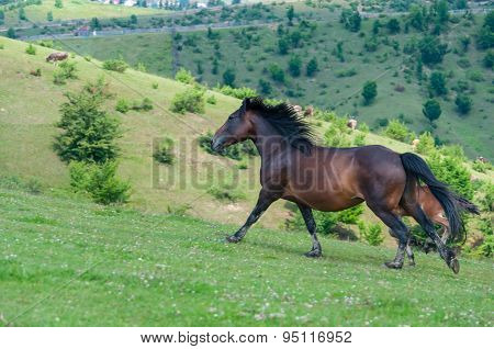 Wild stallion run on pasture at summer evening against mountains