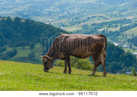 The cow is grazed on a green field.