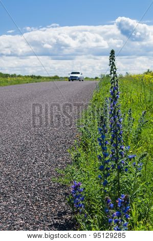 Car Moving By Rural Road, Focus On Front Roadside Flowers