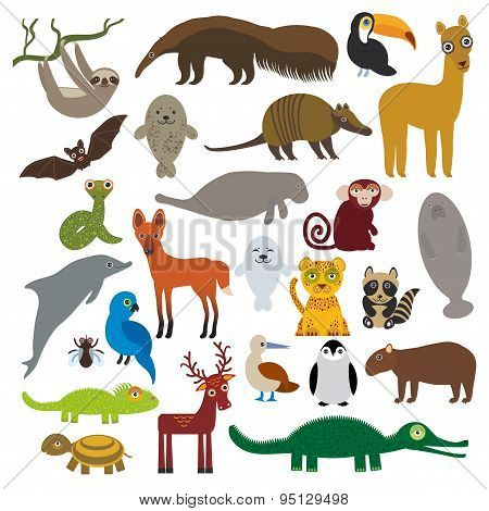South America Sloth Anteater Toucan Lama Bat Fur Seal Armadillo Boa Manatee Monkey Dolphin Maned Wol