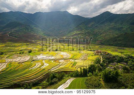 Rice fields on terraced in rainny seasont at TU LE Village, Yen Bai, Vietnam.