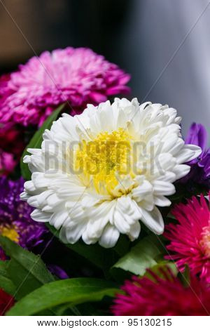 Fresh Large Flowers Autumn Asters