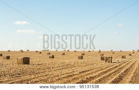 Field After Harvest .