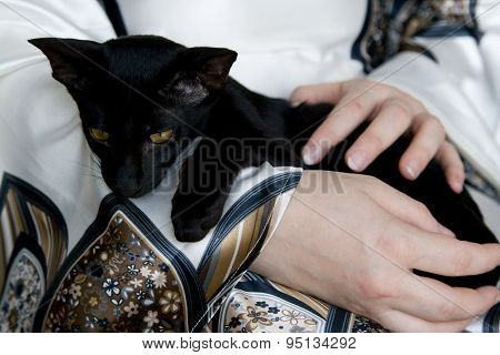 Black Young Cat Sitting On Hand In The Hostess.