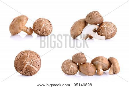 Set Of Shiitake Mushrooms Isolated On The White Background