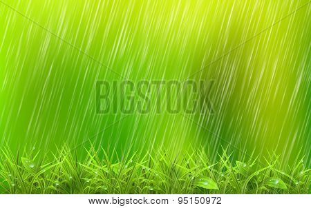Summer Rain Drops On The Green Grass