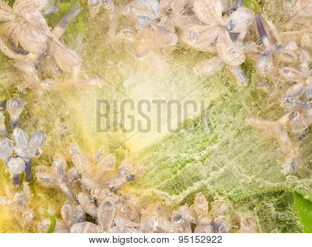 Floral Abstraction Of Lilac Flowers