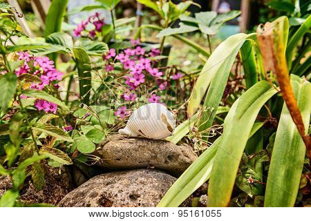 mediterranean garden with flowers and shell