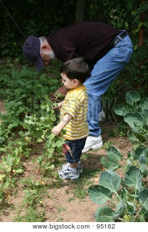 Boy Helping Grandpa In The Garden  02