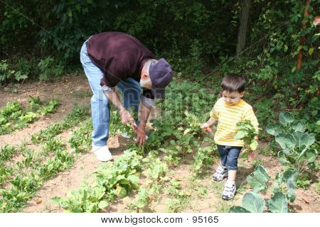 Boy Helping Grandpa In The Garden  05