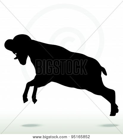 Big Horn Sheep  Silhouette In Attacking  Pose