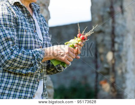 Woman Hands With Just Picked Radish
