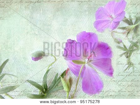 Postcard Floral Template.