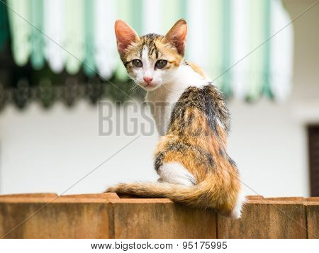 Skinny Cat Sit On A Brick Wall.