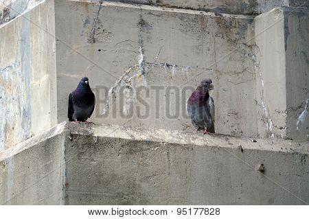 Pigeons Under the Mitchell Street Bridge