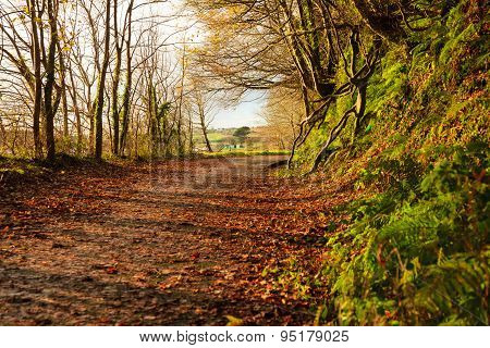 Autumn Pathway. Landscape With The Autumnal Forest.