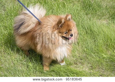 Beautiful dog on green grass