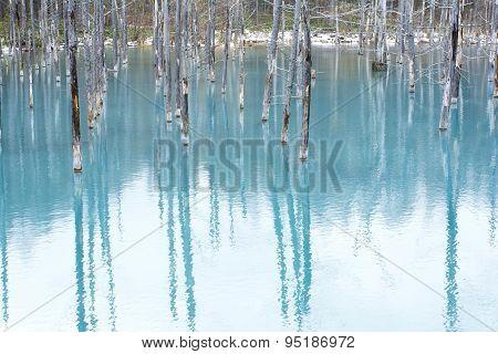 Shine reflected blue pond