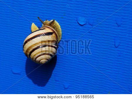 Slowly creeping striped snail