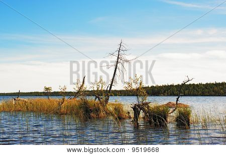The Dried Up Trees On A Small Islet