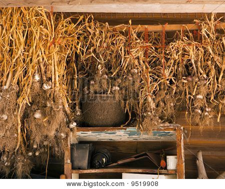 Garlic In The Drying Shed