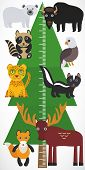 pic of measuring height  - Big green tree spruce polar bear bison eagle Leopard raccoon skunk elk fox on white background - JPG