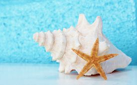 stock photo of conch  - white Conch shell with Blue background and copy space starfish - JPG