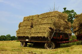 image of hayride  - Large bales of straw on a tractor trailer - JPG