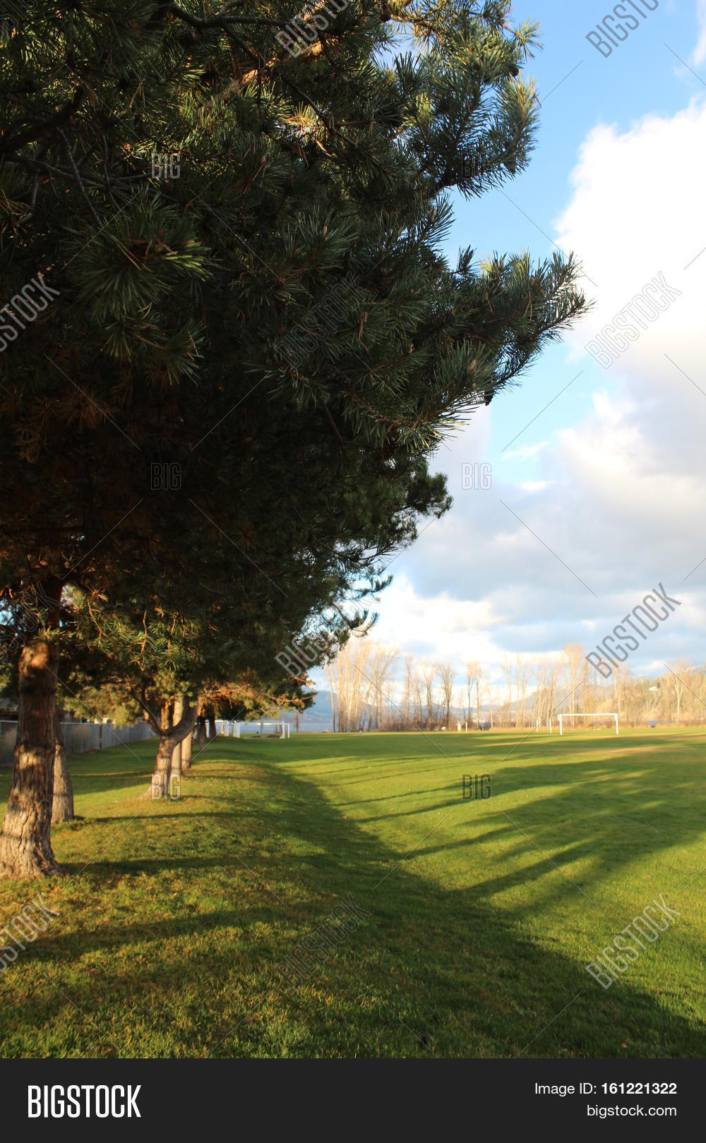 tall green grass field. Autumn Field And Trees Landscape. Tall Green Along End Of Grass In