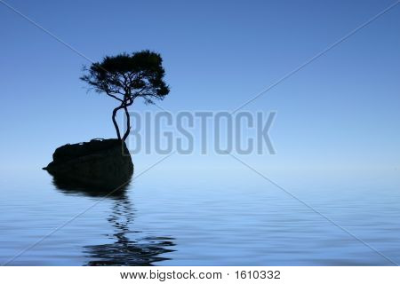 Lonely Tree - New Zealand