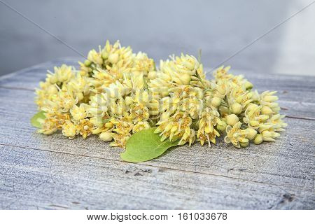 small heap of fresh flowers of linden tree, natural background with sun lighting