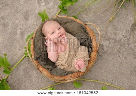 An alert three week old newborn baby boy swaddled in a beige wrap and lying in a round organic basket. Shot with a sand and beach vegetation background.