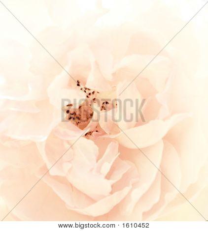 Peoni Flower