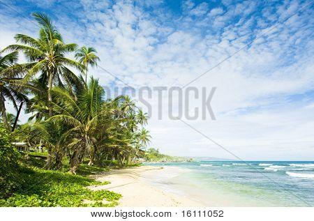 Martin's Bay, Barbados, Caribbean