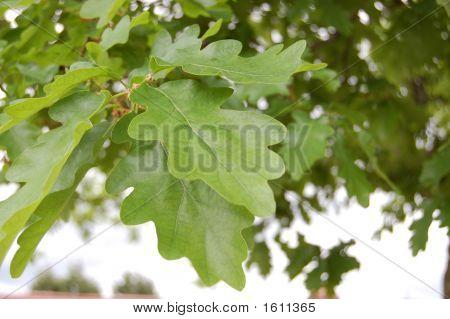 Folha de árvore