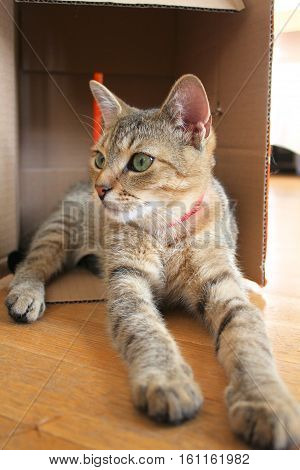 Cute young cat playing in cardboard box