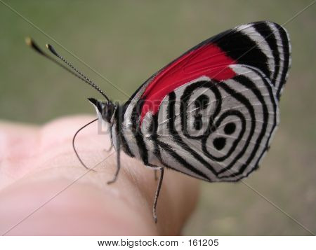 Butterfly On The Hand