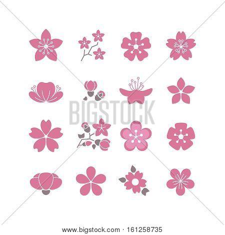 Cherry pink flower, spring sakura blossom vector icon set. Blossom sakura flower, branch of bloom sakura illustration