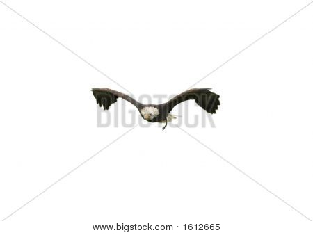 American Bald Eagle Cut Out