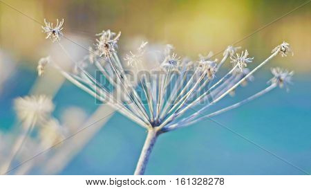 Dry plants in the spring field, close up, macro