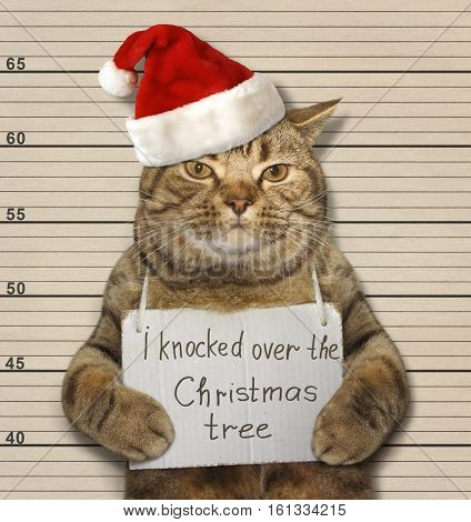 The cat knocked over the Christmas tree. It was arrested for this.