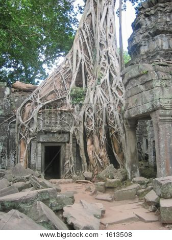 Banyan Tree Over Old Ruin Temple, Ta Prohm, Bayon, Angkor Tom, Cambodgia