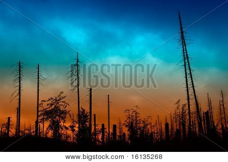 Dead forest after Storm