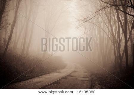 Estrada numa floresta fogy