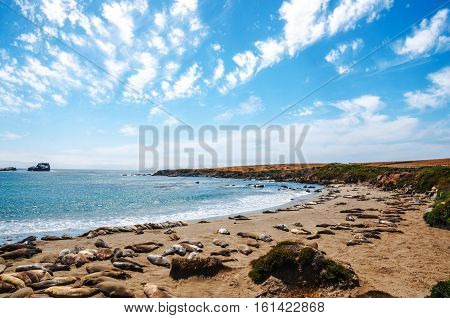 Elephant seals viewpoint - Big Sur Coastline, California, USA
