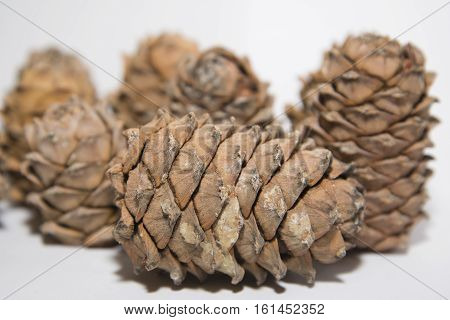 Pine Lump Full Of Nuts Photographed On A White Background.